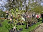Plantes_en_f_te_au_Jardin_de_Lakas___la_Plaine_sur_mer__6_