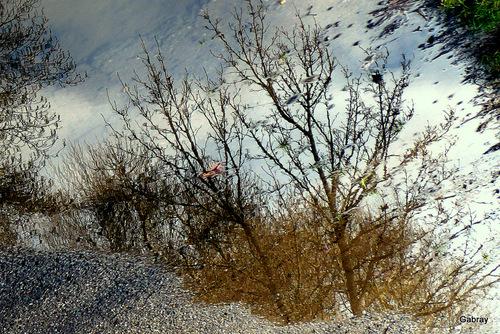 Canal du Midi: des flaques et des reflets
