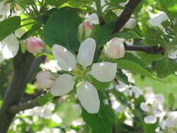 Des fleurs au printemps, des fruits en automne .