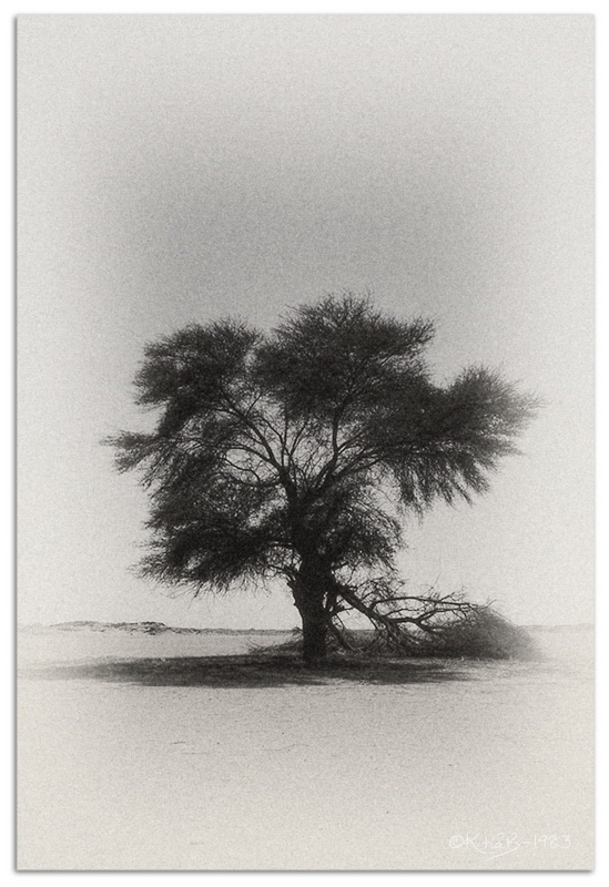Epineux - désert