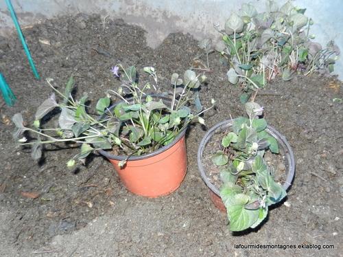 Drôle de plante
