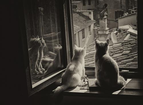 07 - Encore des chats à la fenêtre