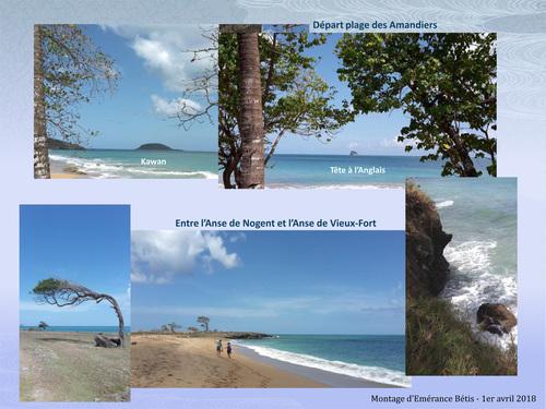 Sur la trace des Amandiers à Grande Anse