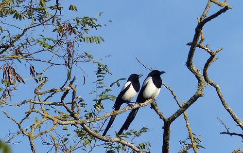 Petites poésies d'oiseaux ,