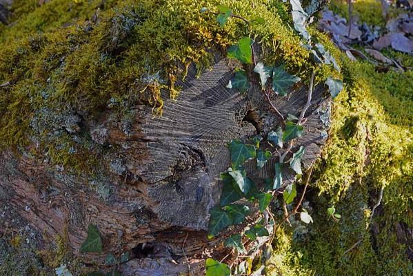 Feuilles-herbes--fougeres-4 9509 modifié-1
