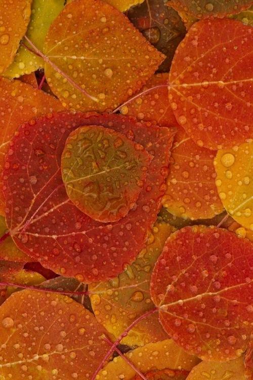 Textures automne du net