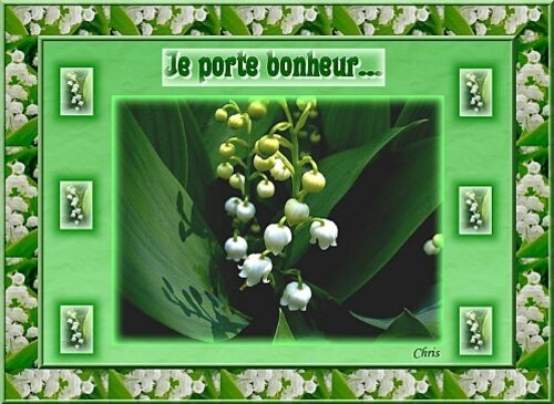 muguet-chris.jpg