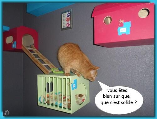 Le mur des chats
