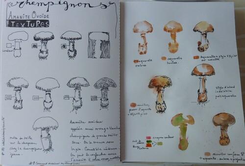 Atelier champignons prposé par Renata