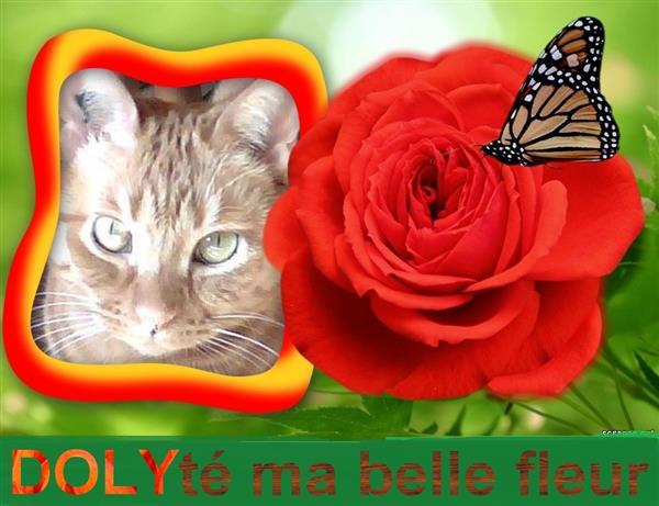 pour Doly