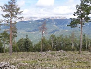 Sommet de l'Alvarin (1555 m) - Panorama