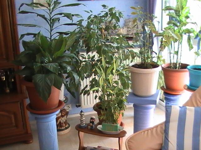 Le balcon jardin à Nini.