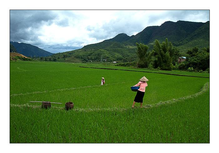 Une rizi7re par jour 24