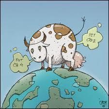 Une vache ça ne produit pas que du lait..
