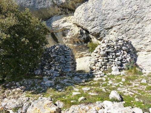 Forêt de cèdres (Bonnieux)