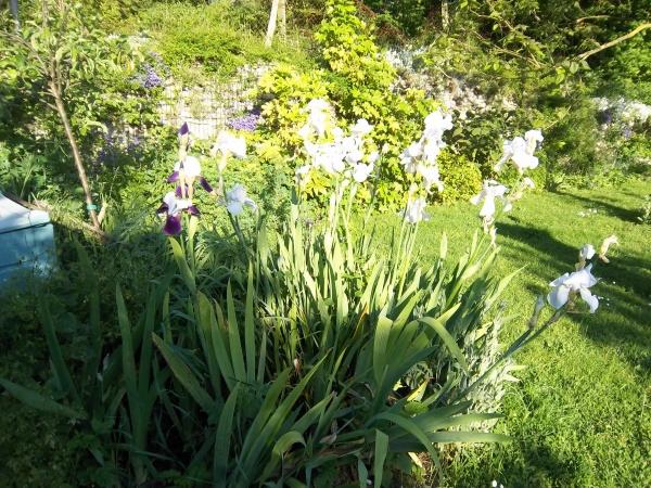 une jardiniere passionnée