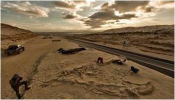 ~ Un cimetière de baleines préhistoriques retrouvé dans le désert d'Atacama (Chili) ~