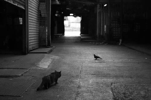 Des chats du monde -2