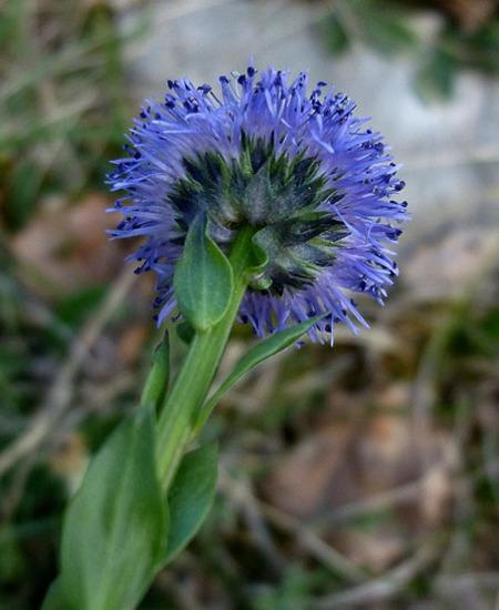 bleu50