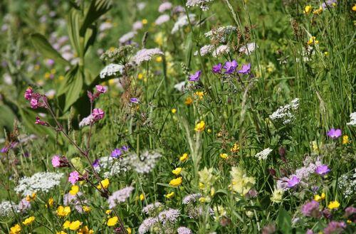 Les délicates fleurs