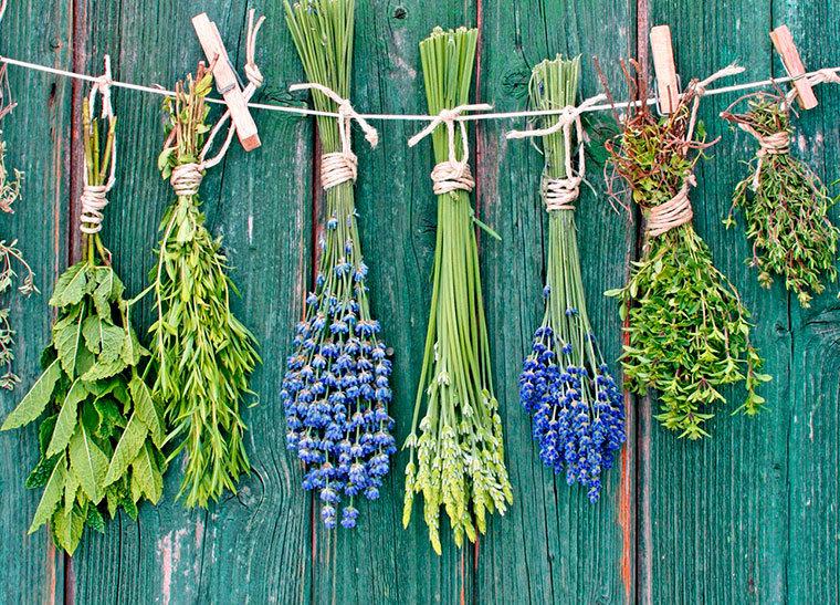 Растительные препараты для лечения диабета