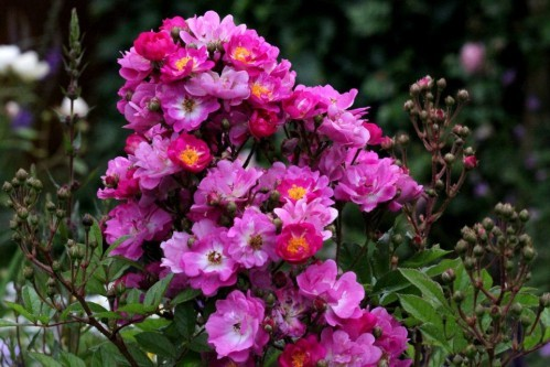 Princesse-Violette3.jpg