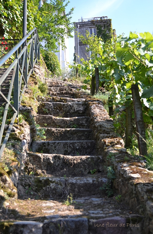 """Le vignoble du """"Clos Montmartre"""""""