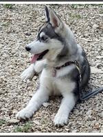 Mayka (4 mois)