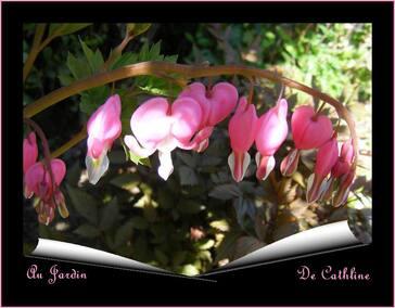 Les Vivaces de printemps