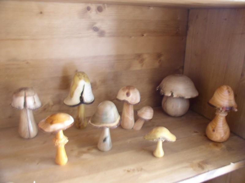 779 - Quand le bois devient champignons !