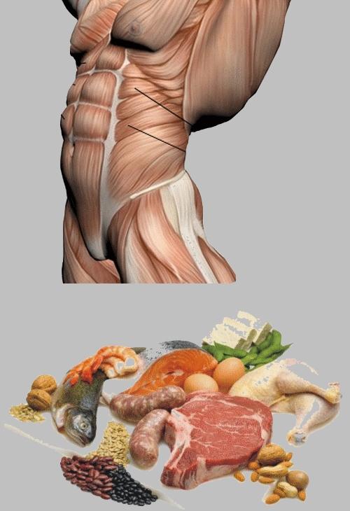 Tonifier nos muscles