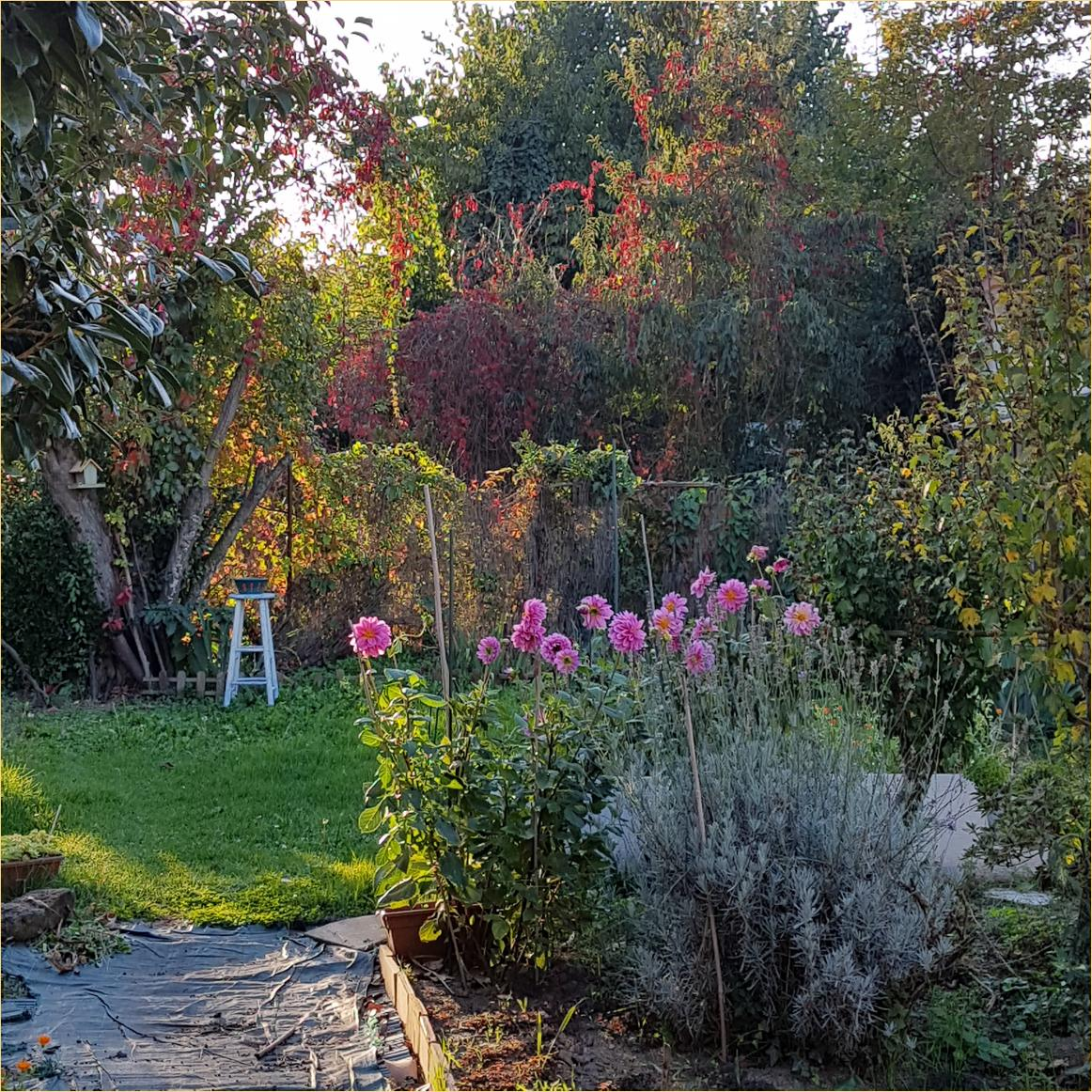 Dans mon jardin kreichaline - Campe dans mon jardin ...