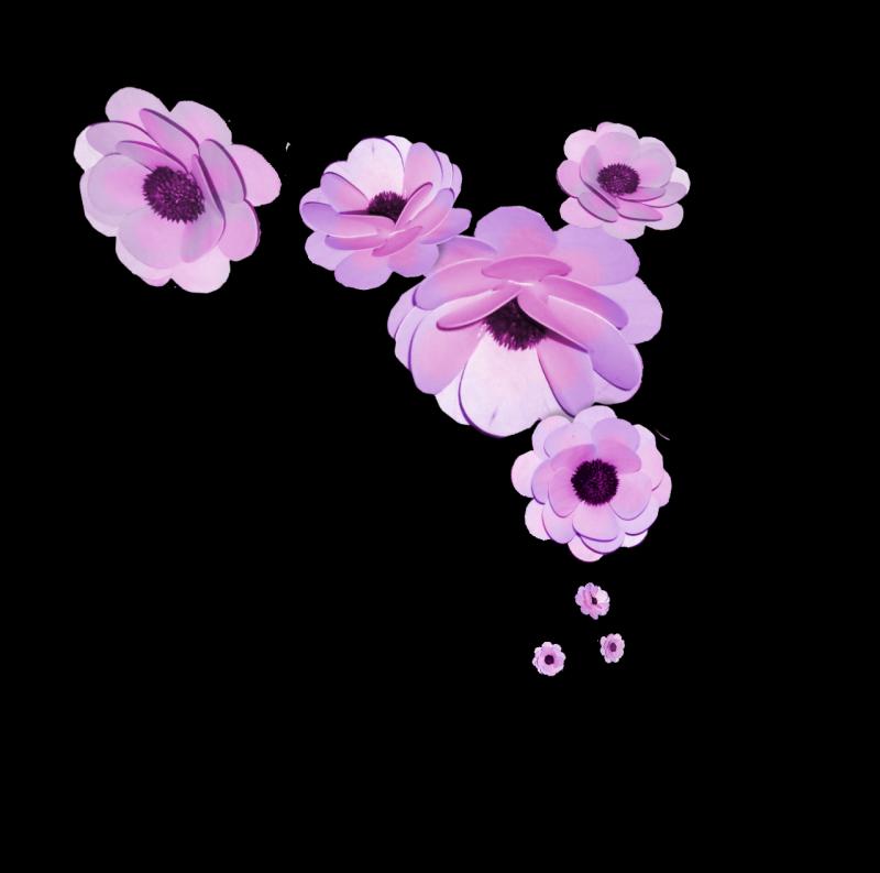 Pembe gül resimleri uzantılı beyaz gul yeni ve güzel beyaz