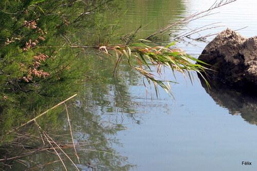 Bords de l'Agly : fleuve côtier (2)