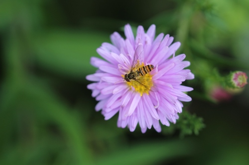 Biodiversité animale