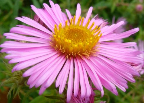 Tubes PNG de fleurs