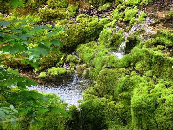 La tufière de Rolampont, une véritable merveille minérale et végétale....