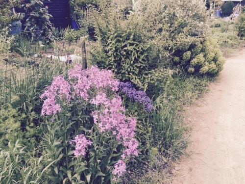 Les jardins familiaux du Parc de la Crapaudine.