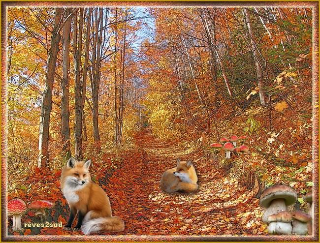 Un sous bois en automne