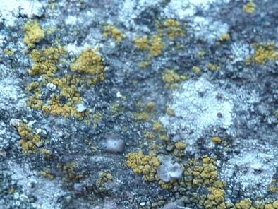 Bivouac 2 nuits :  Vallon de Quioulès (Aston) - 09