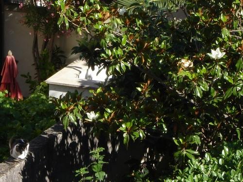 Jeu des 8 différences : le chat sous le magnolia