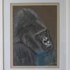 Gorille St Martin