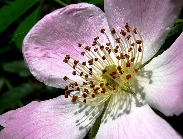 fleurs1.06-046.JPG