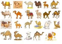Tableaux à double entrée chameaux-dromadaires (et âne !)