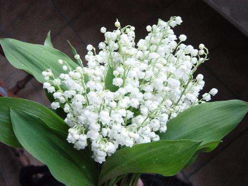 que les fleurs sont belles