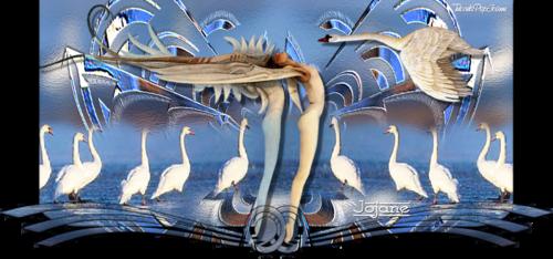 Top Swan