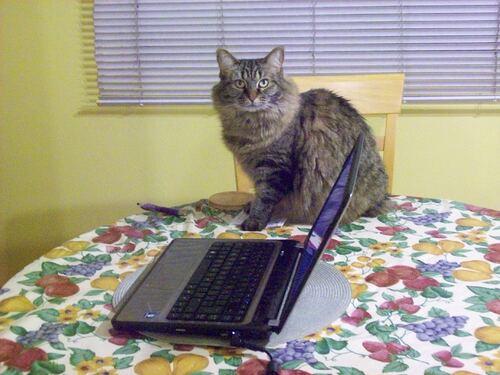 MIMI s'occupe des blogs