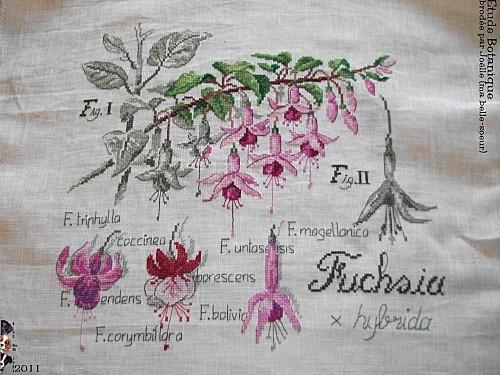 2011 etude botanique brodée Joelle (R) (1)