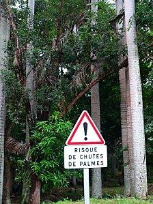 -panneaux-insolites-autres-arbres-la-reunion-