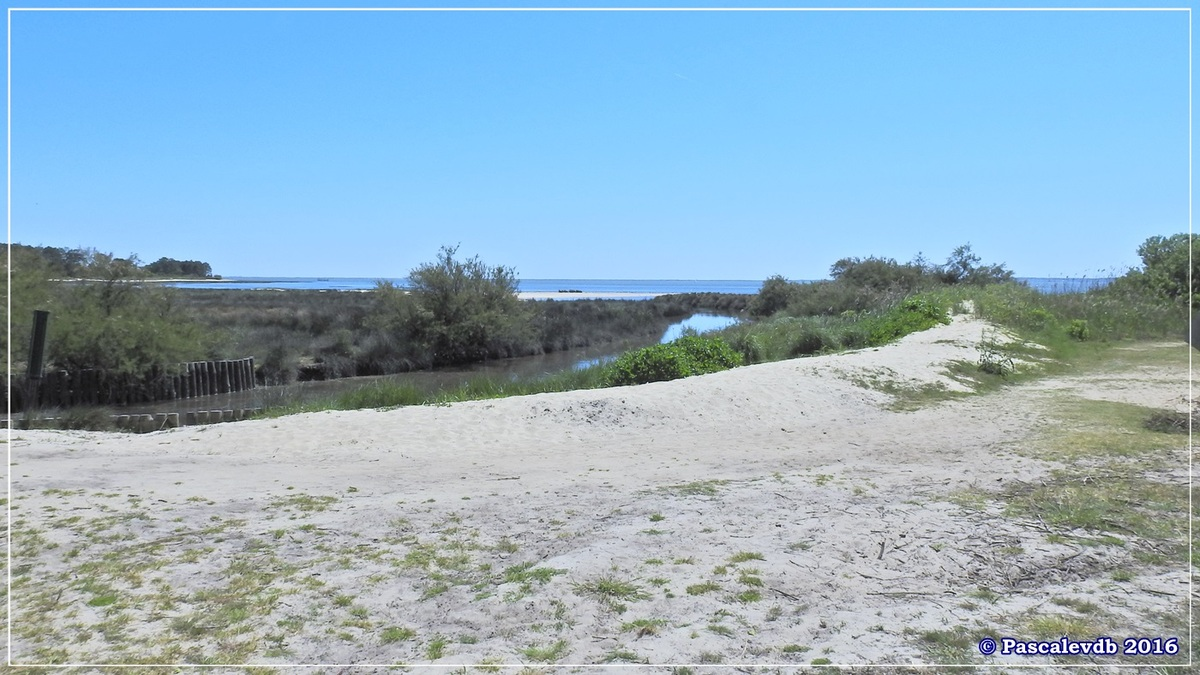 Port ostréicole d'Andernos - Mai 2016 - 1/9